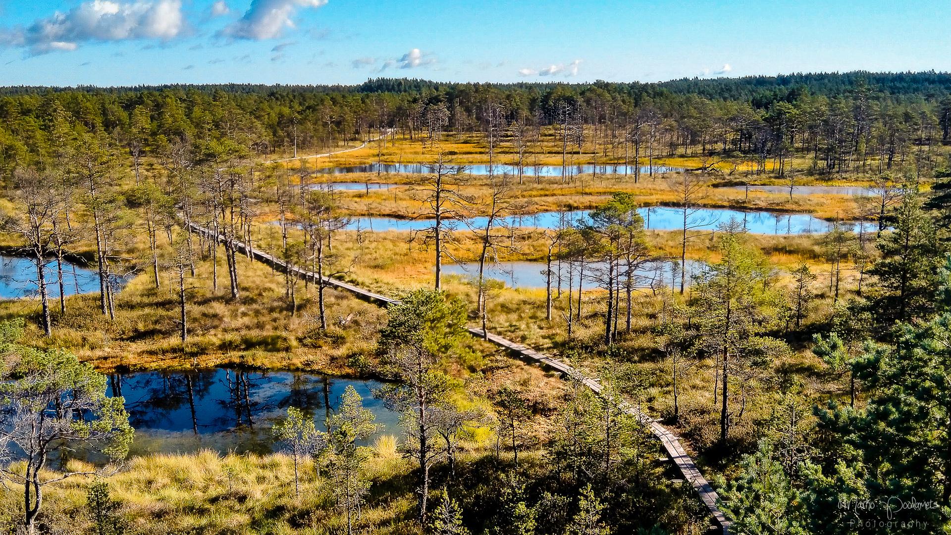 raised bog landscape